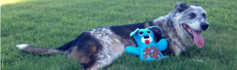 Dog From Kids Creations: Easy Softies Projects {Pattern Test}